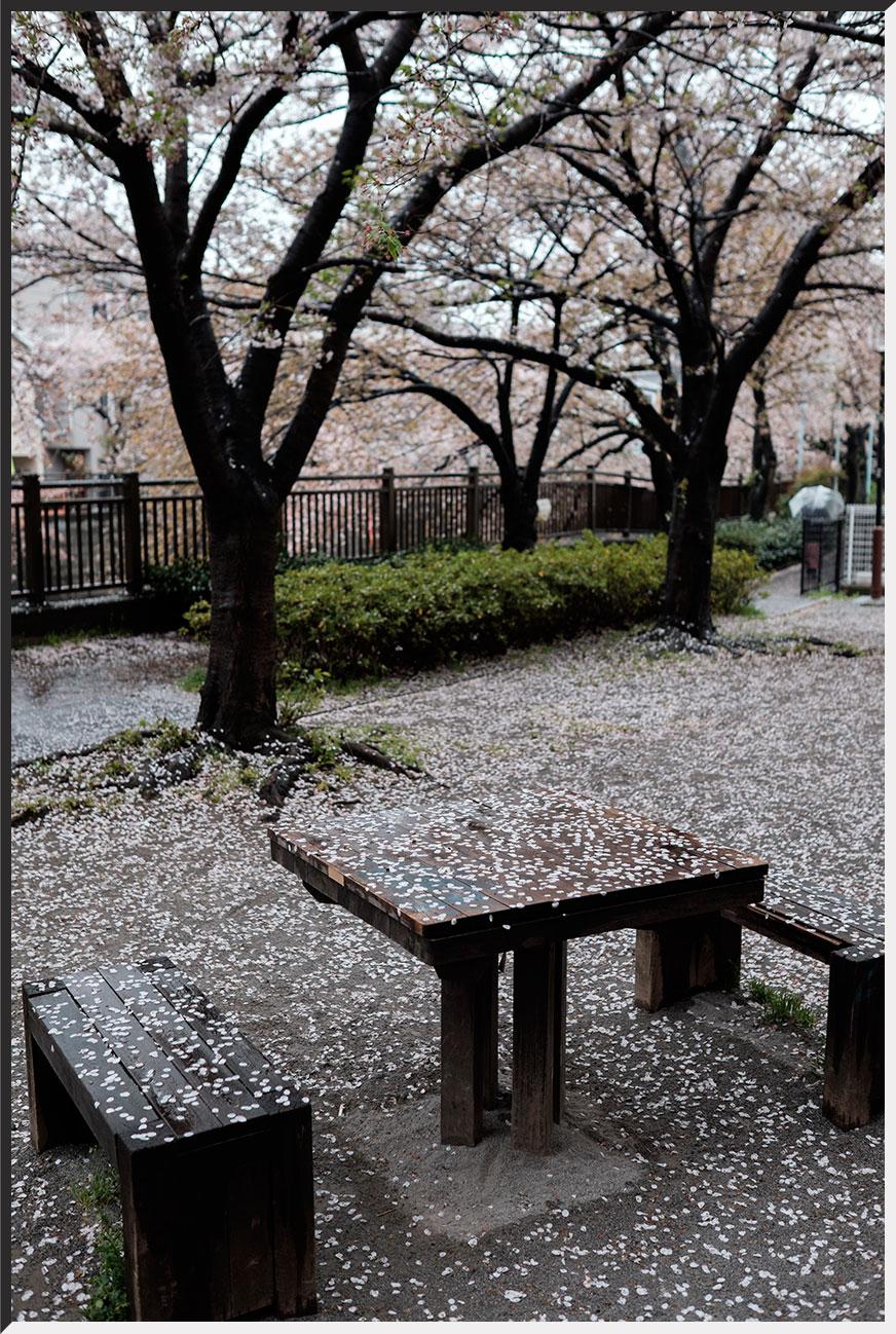 hanami_150405_32.jpg