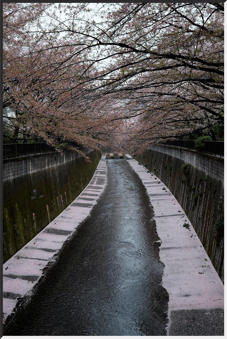 hanami_150405_34.jpg